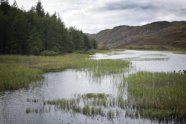 glendu, forest, loch, Scotland, sutherland